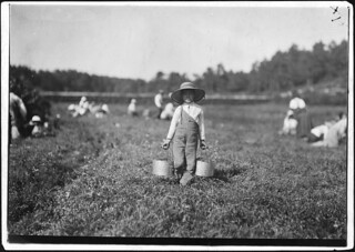 Belford Coldos, 8 years old, picking on Weeks' Bog. Falmouth, Mass, September 1911