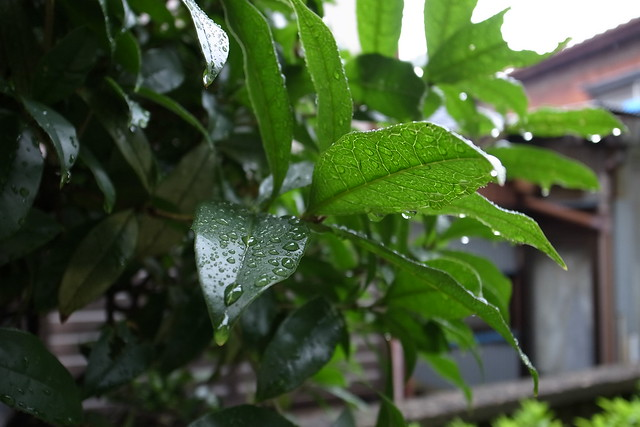 leaf with waterdrop