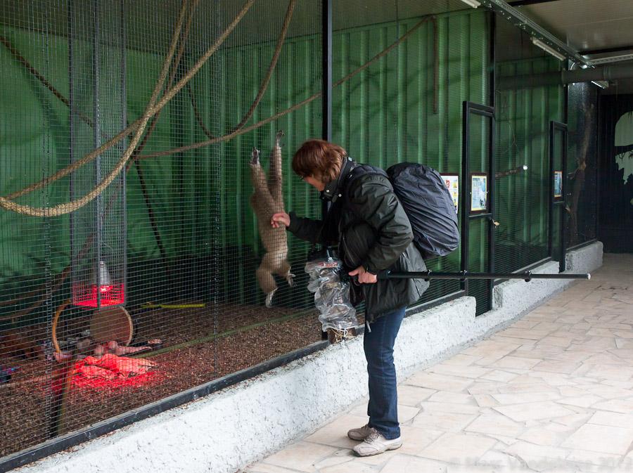 Sortie au Zoo d'Olmen (à côté de Hasselt) le samedi 14 juillet : Les photos d'ambiance 7573051046_17db982eb4_o