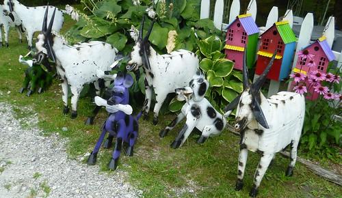 metal goats