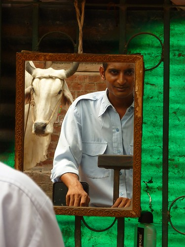 Men and cow in India