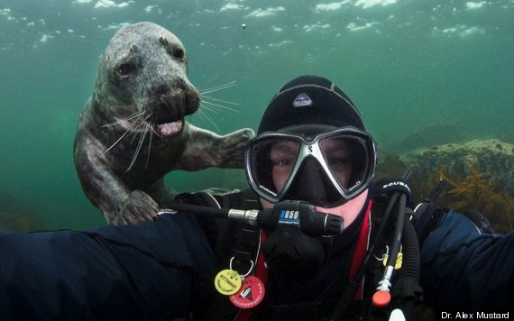o-SEAL-PHOTOBOMB-570