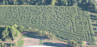 another cropped view of corn maze aug 1 2012