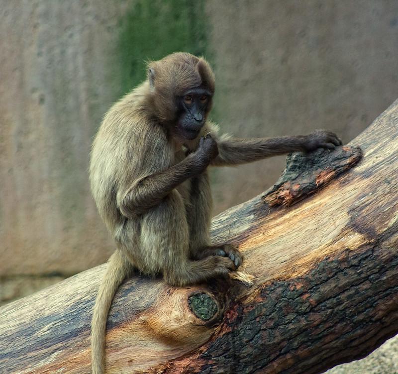 Zoo Wilhelma Stuttgart