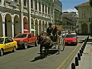 cuenca horse