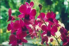 annual plant, flower, plant, wildflower, flora, petal,