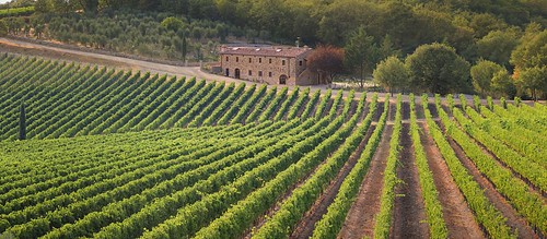 Sunlight and air enriches the Chianti grapes grown on textured terriors
