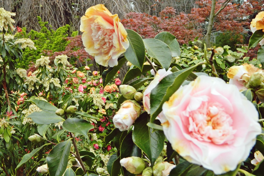 Jardin japonais Albert Kahn (6)