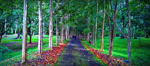 trees plant green nature forest landscape outdoor perspective environment