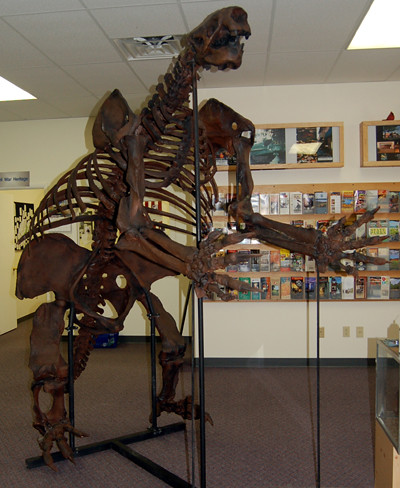 Megalonyx jeffersoni, sloth skeleton