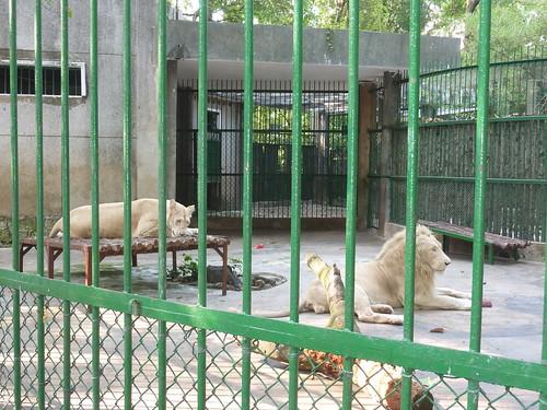V 12-Ho Chi Minh-Jardin zoologique (5)