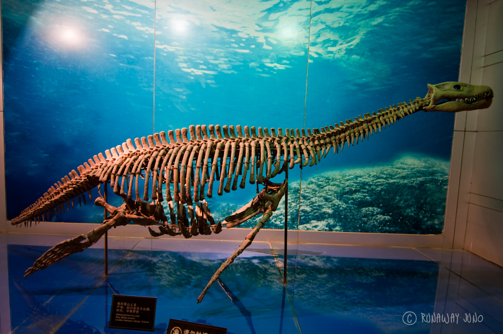 Plesiosaurs_Zigong_China
