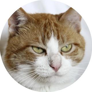 the street cat