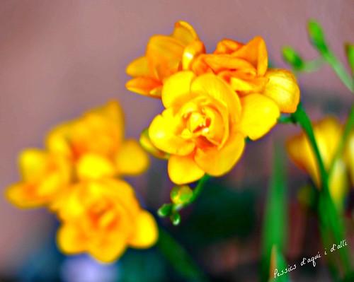 flors al balcó