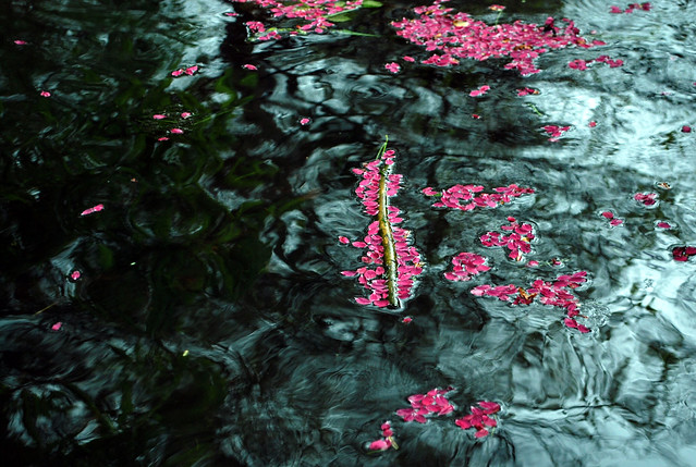 DSC_0264-petals-in-water_crop_adj
