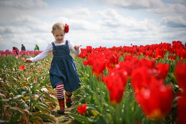 tulip festival-10