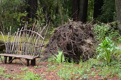 big tree fall down