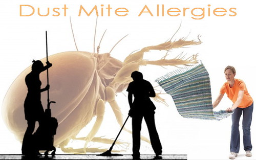 Treatment of Dust Mite Allergies