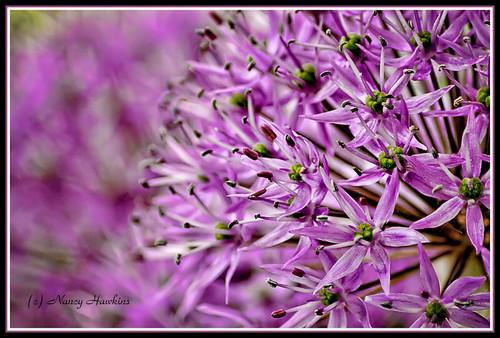 Purple by Nancy Hawkins