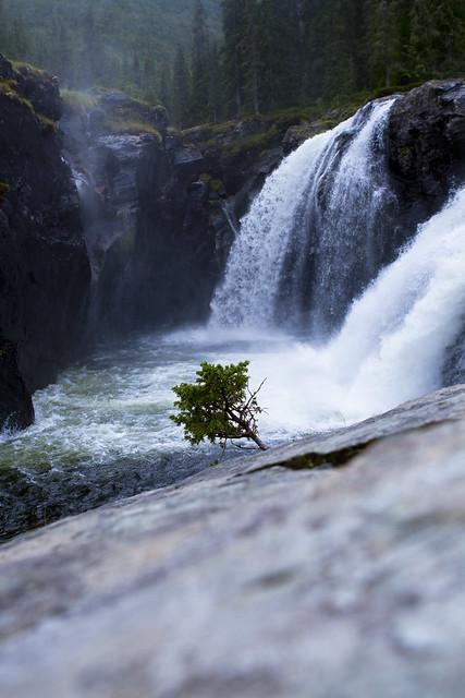Rjukandefossen Tree
