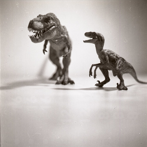 dusty dinosaurs