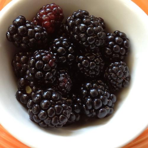 Blackberries from my backyard! Yumm by Abigail Harenberg