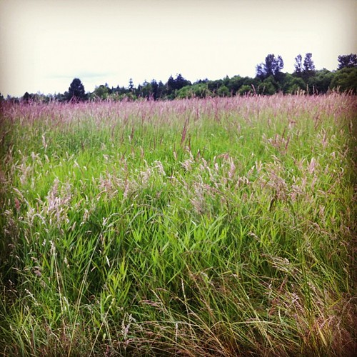 Tall grass and a grey day