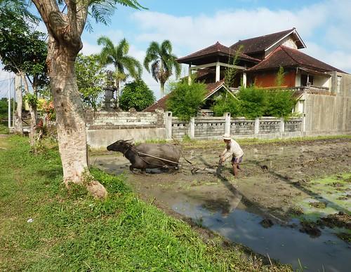 Bali-Route Legian-Jatiluwih (18)