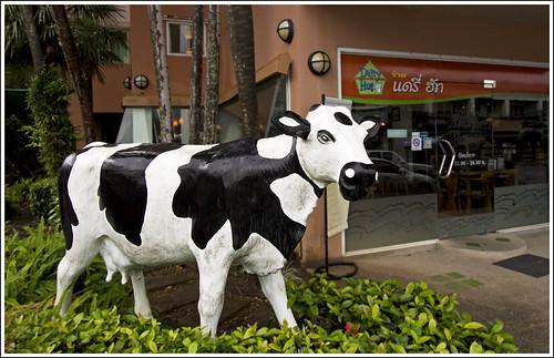 Dairy Hut Phuket Restaurant