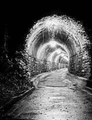 Creepy Walking Tunnel