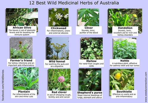 12 Best Medicinal Plants