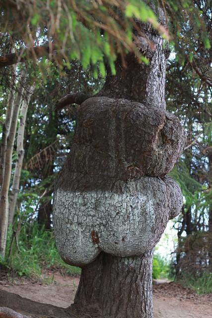 Tree Butt 28