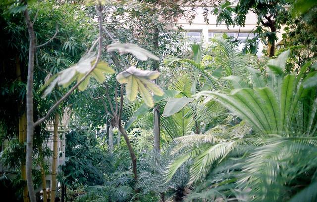 Spring memories : la serre du jardin botanique de strasbourg