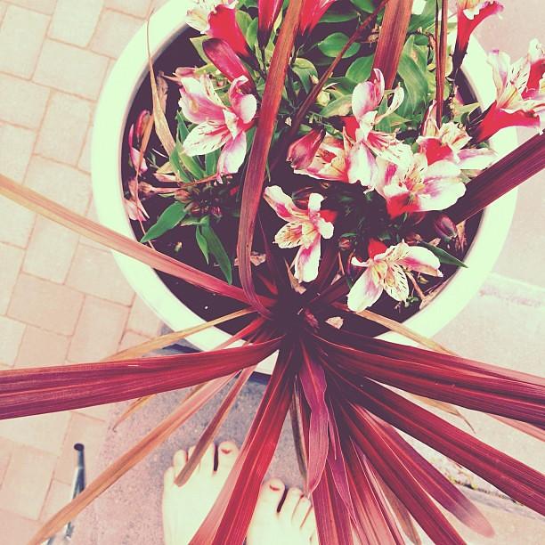 #flowers #hemuli #pink #palepink #garden #hortonomi #sexytoes part II #fromwhereimstanding