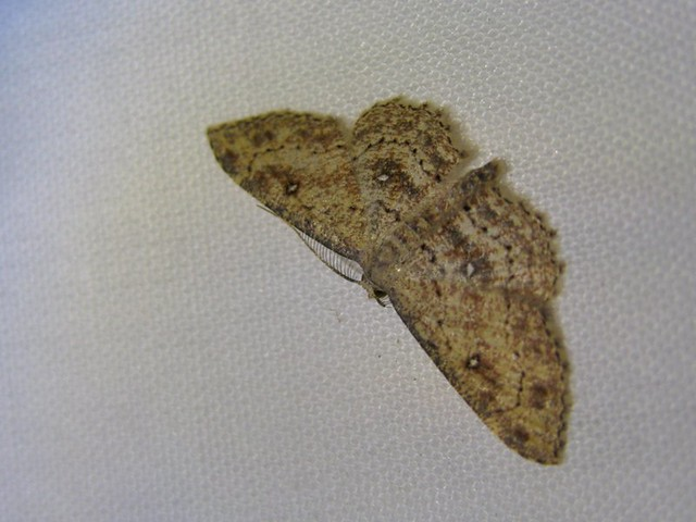 Back porch moth