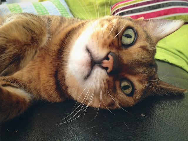 Rani Cat