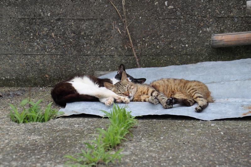 港町の猫たち