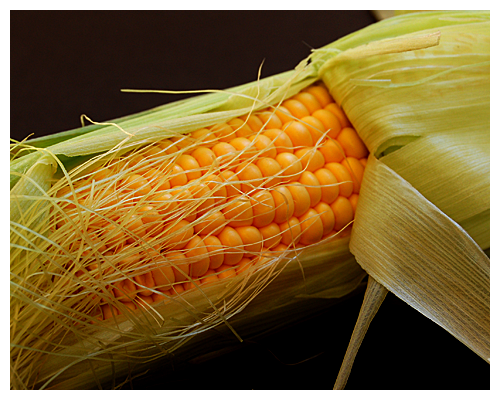 corn© by Haalo