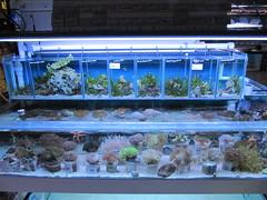 invertebrate setup
