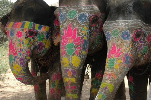 indiaelephants