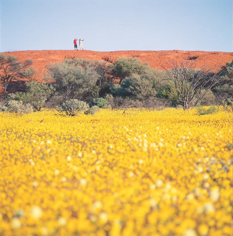 Wildflowers001-1.jpg
