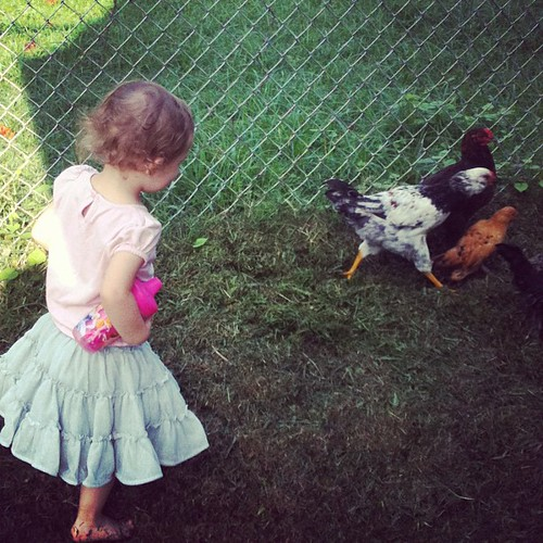 August. You wear a tutu to chase chickens, right?