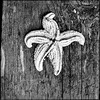 Dried_starfish_on_fishing_dock_Peggys_cove_Nova_Scotia_Untitled-7