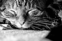 Sleeping beauty 2/2