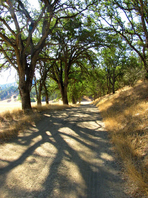 Long Shadows on the Valley Trail