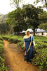 Nuwara Eliya by nor_sound
