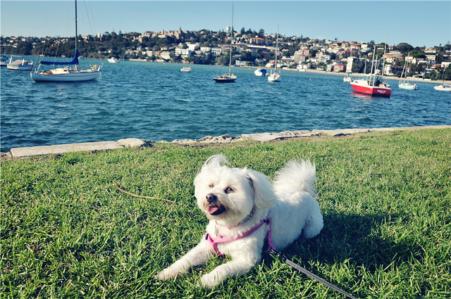 Sydney: Catalina Rose Bay