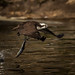 Osprey IV (5-12-16) by mikecullivan