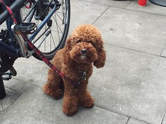 Ok but I promise this is an actual pup & not a very elaborate chocolate carving #dogs #dogspotting #pup #chocolate #london