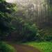 Eifel Paths by Netsrak